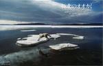極北のオオカミ.jpg
